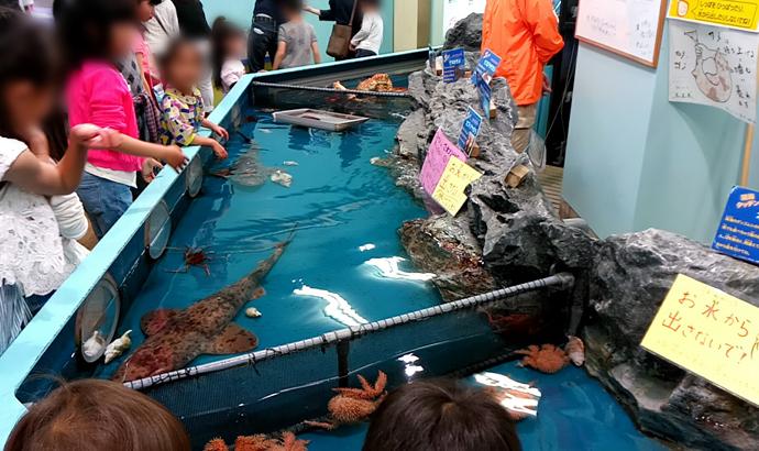 竹島水族館 タッチングプール