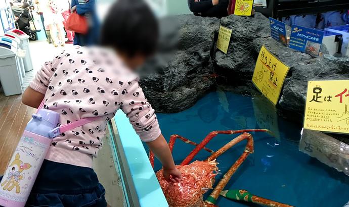 竹島水族館 タカアシガニ