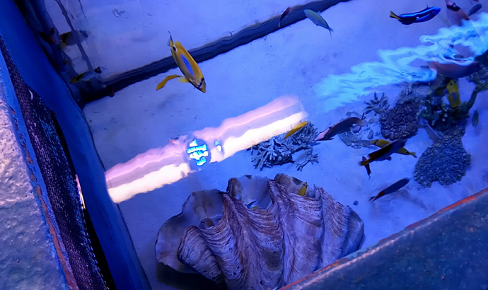 上からの覗いた水族館水槽