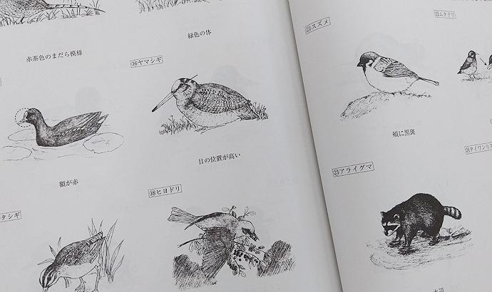 狩猟鳥獣の身体的特徴